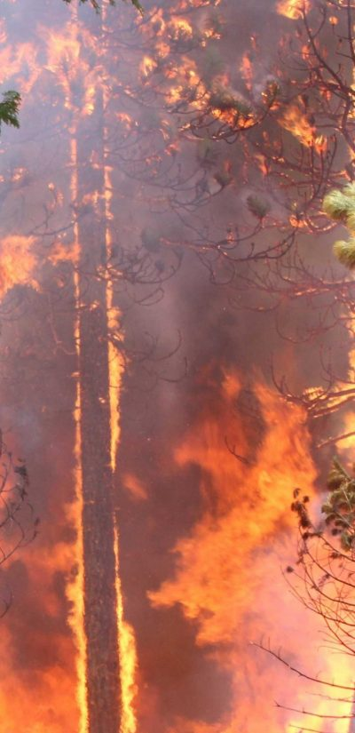 The Rim Fire in the Stanislaus National Forest near in California began on Aug. 17, 2013 and is under investigation. The fire has consumed approximately 235,841 acres and is 70% contained. U.S. Forest Service photo.